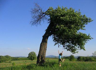 El árbol se endereza cuando esta pequeño.