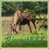 Biscuit888