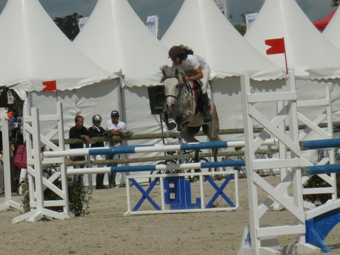 Les poneys D'Aspe