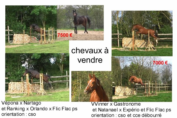 chevaux � vendre
