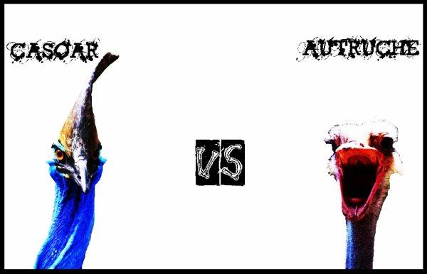 Autruche vs casoar combats virtuels d 39 animaux - Poids d une autruche ...