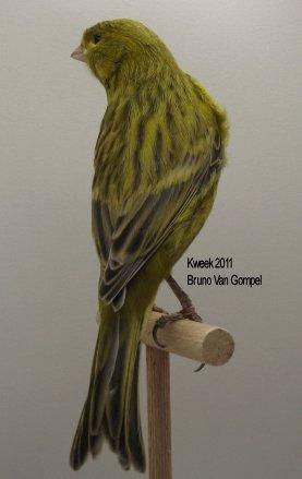 Op 't hok bij ... Bruno Van Gompel te Perk (B) Zwart Pastel Geel Intensief - Man
