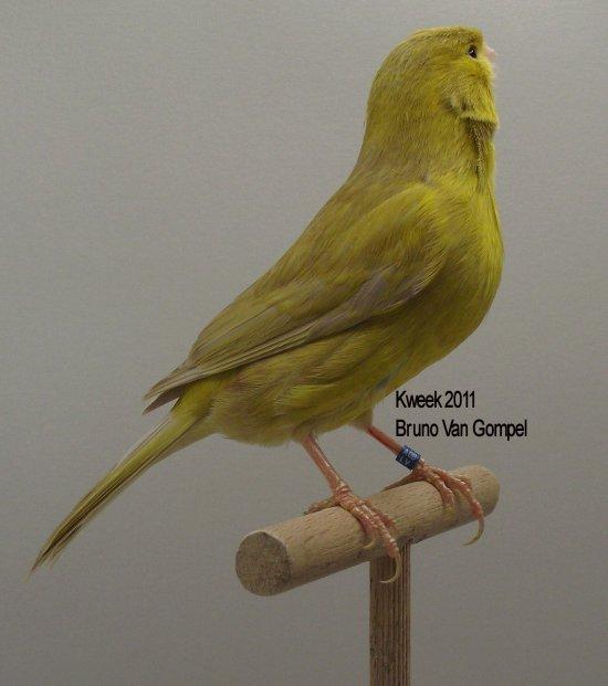 Op 't hok bij ... Bruno Van Gompel te Perk (B) Bruin Pastel Geel Intensief - Man & Pop