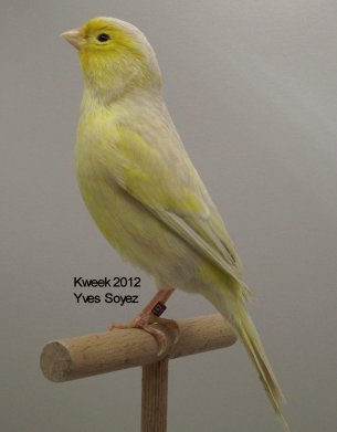Op 't hok bij Yves Soyez te Lessines (Lessen) - Bruin Opaal Geel Intensief en Schimmel