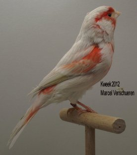 Op 't hok bij ... Marcel Verschueren te Gavere - Bruin Opaal Rood Mozaiek T2