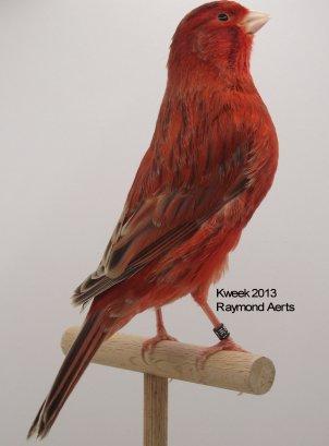 Op 't hok bij ... Raymond Aerts te Begijnendijk (B) - Agaat Rood