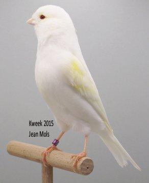 Gouden Medaillewinnaars V.v.N.K. - C.O.M. Leuven 2015 bij Jean Mols te Mol (B)