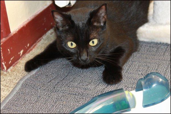 Ba quoi ! Un chat retombe toujours sur ses pattes..l� j'imite juste mimi ma souris aplatie