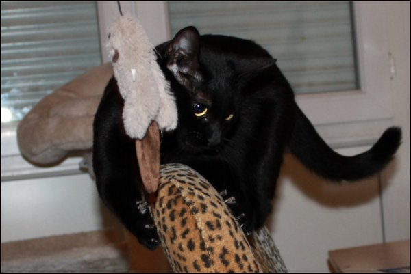 Bonsoir..une ptite partie de chat perché avec moi ?