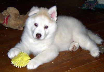 Le plus beau chien du monde les brunes en forces - Le plus beau canape du monde ...