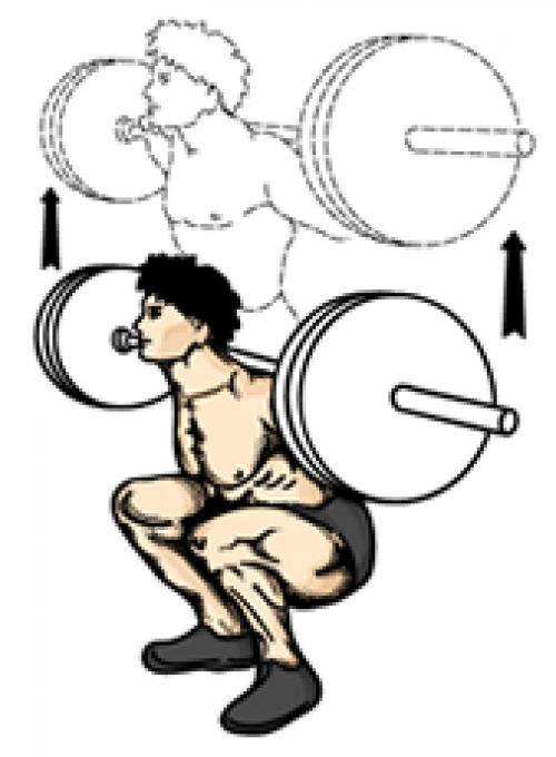 een full body oefening die vooral de spieren van de dijen, heupen en billen, alsook de versterking van de botten, ligamenten en de versterking van de pezen pezen in de hele onderlichaam traint. Squtten is een cruciale oefening voor het verbeteren van de sterkte en de grootte van de benen en billen.