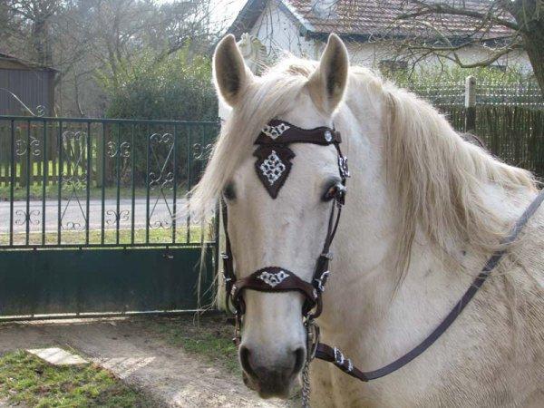 bride marron pour cheval espagnol