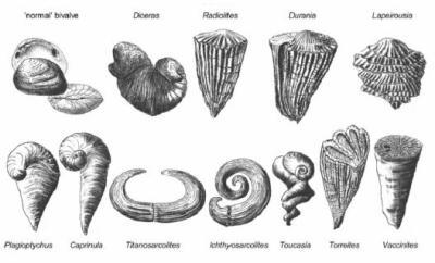 les mollusques les bivalves les rudistes groupe fossile