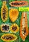 papaye (fruit)