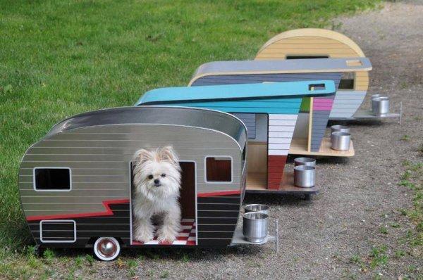 camping toutou