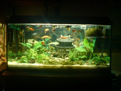 aquarium de 90 litre plant blog de aquariophiliechacha. Black Bedroom Furniture Sets. Home Design Ideas