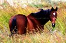 Photo de citations-equine