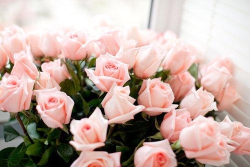 """""""La vie est une rose, mais m�fiez vous, il y a beaucoup d'�pines."""" Ma grand m�re."""