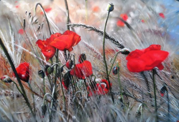 Le vent dans les bl�s.......