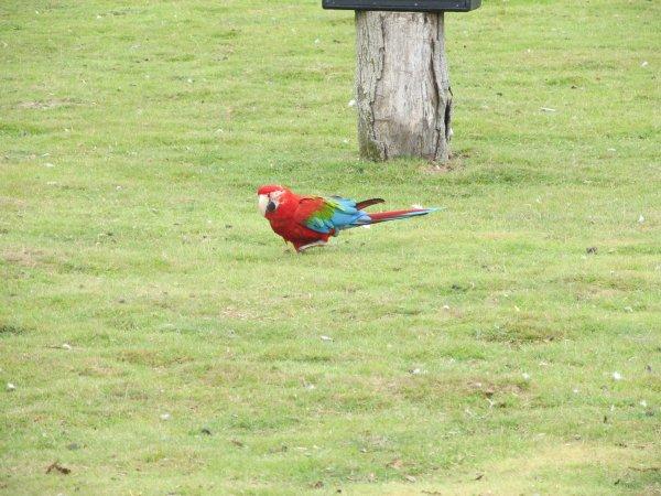 visite d'un zoo avec spectacle d'oiseaux