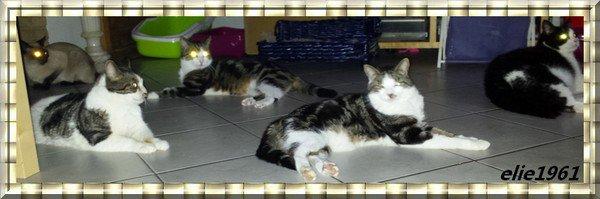 5 de mes 13 chats (l)(l)(l)