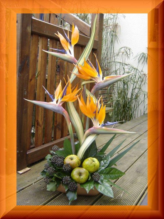 oiseaux du paradis art floral. Black Bedroom Furniture Sets. Home Design Ideas
