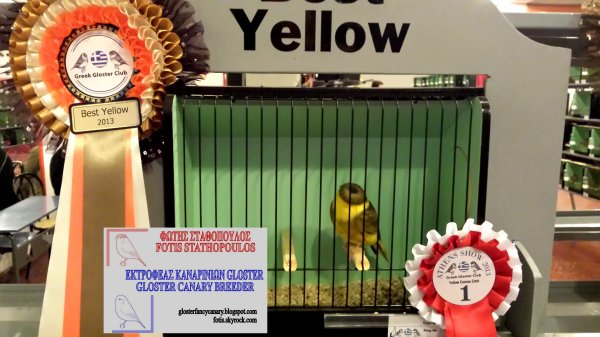Green Variegated Intensive Corona cock - Best Yellow at GGC one day show 2013