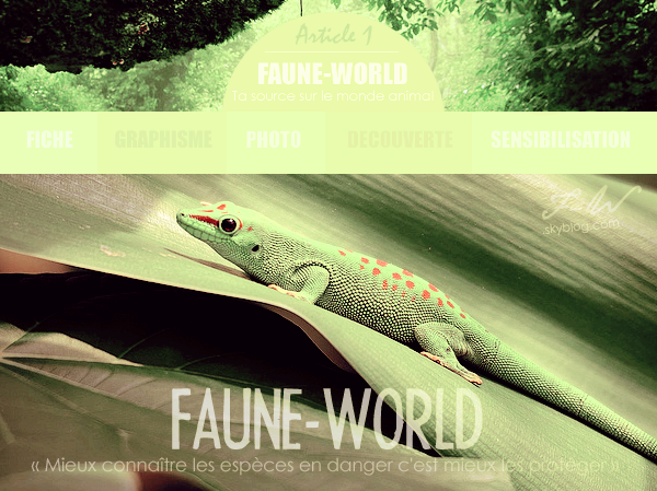 _______� �ARTICLE N�1 :�BIENVENUE SUR FAUNE-WORLD_______ � Post� le 01 Ao�t 2009 � Faune-world.skyblog.com