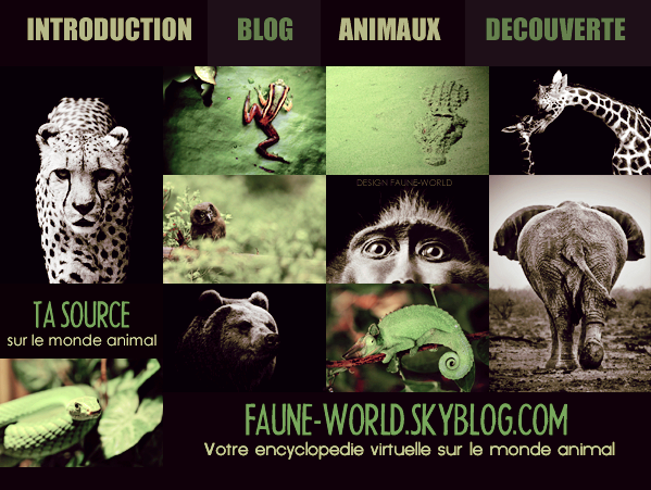 _______� �ARTICLE D'INTRODUCTION :  ACTUALITES DU BLOG_______ � Post� le 13 Ao�t 2011 � Faune-world.skyblog.com