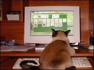 un chat qui joue au cartes sur l'ordinateur de moi lol
