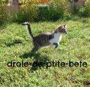 Photo de drole-de-ptite-bete