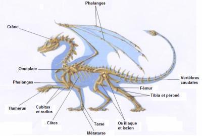 Le squelette du dragon dragons de l gende - Coup du dragon en anglais ...