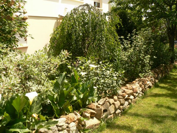 Mon jardin (2)