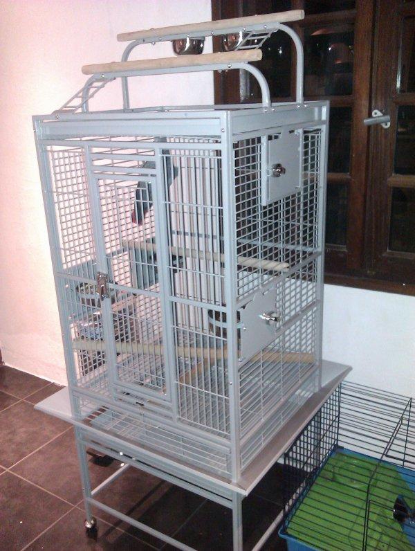 coco mon gris du gabon avec sa nouvelle cage blog de. Black Bedroom Furniture Sets. Home Design Ideas