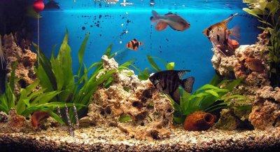 blog de aquamat blog d 39 aquarium. Black Bedroom Furniture Sets. Home Design Ideas