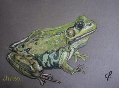 Grenouille verte art dessins et peintures - Dessin de grenouille verte ...