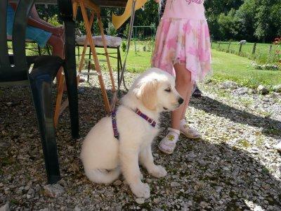 Cristal est la chienne de ma petite cousine voici Cristal