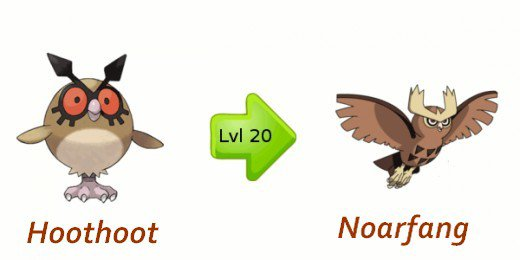 Evolution de Hoothoot - Pokemon les évolutions