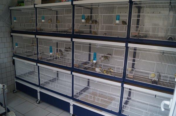 Mes cages italgabbie