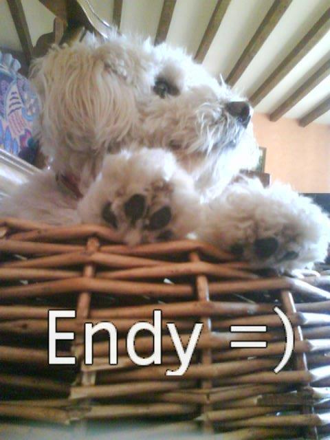 l'histoire d'Endy