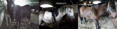 Nouveaux poneys !!
