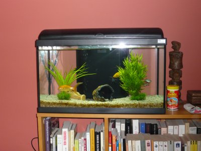 Aquarium mes petits oiseaux exotiques for Ou placer aquarium poisson rouge