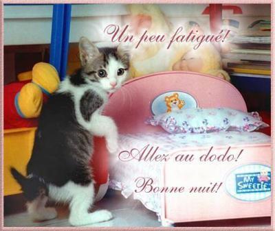 """Résultat de recherche d'images pour """"image belle chat halloween bonne soirée"""""""