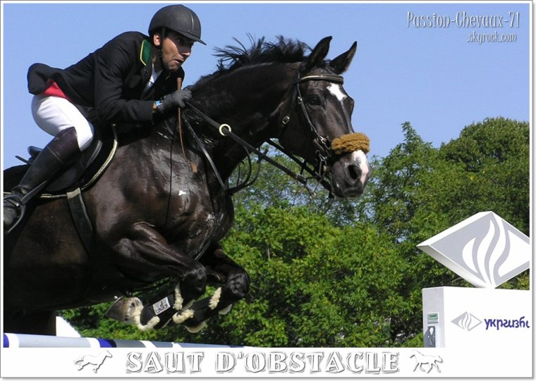 Dressage saut d obstacle cross blog de passion - Frison saut d obstacle ...