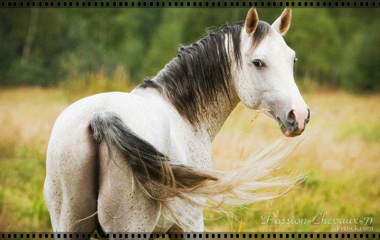 """""""On ne renonce jamais aux chevaux vous savez, �a fait dix mille ans que les humains tentent de dresser les chevaux. Chaque humain recommence avec chaque cheval, le m�me travail, la m�me aventure, difficile et p�rilleuse. Dix mille ans qu'on tombe, dix mille ans qu'on se rel�ve, qu'on invente les voitures, qu'on invente les avions, et pourtant on continue � monter � cheval..."""""""