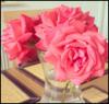 Sakura-Romance