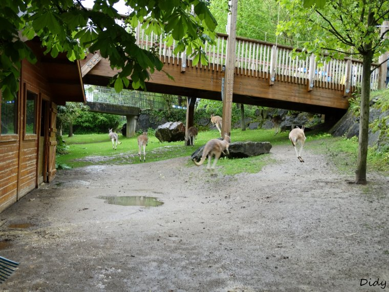 """art. n�7 - matin�e du 03 Mai 2015 """"soigneur d'un jour"""" adulte formule �t� au ZooParc de Beauval"""