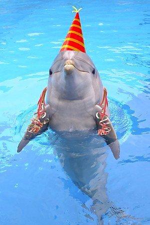 animals with birthday hats