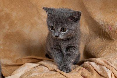 Miaou ? :3