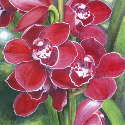 Comment garder plus longtemps vos belles orchid es des - Comment garder une orchidee ...